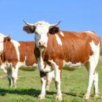 Carne rossa e bianca, perché limitarne il consumo