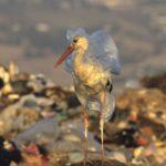 Planet or plastic: la plastica può essere una risorsa?