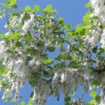 Allergia al polline: i rimedi per stare bene