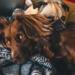 Animali e coronavirus: cosa fare per accudirli