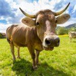 Inquinamento atmosferico, gli allevamenti sono un falso nemico da combattere