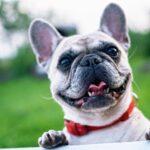 Podcast: è arrivata la serie dedicata ai nostri amici animali