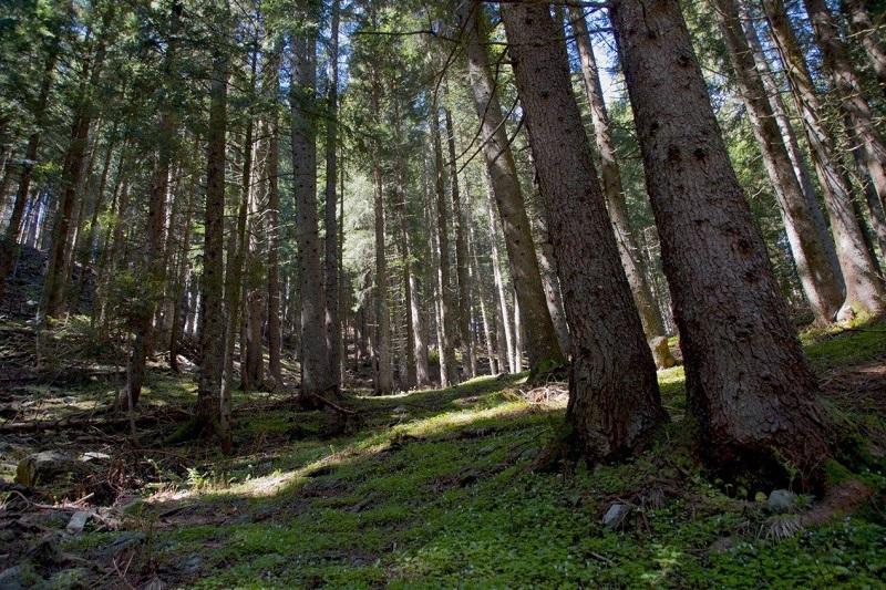 rispettare i boschi