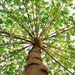 Alleanza Assicurazioni e la ripresa sostenibile: investimenti in prodotti evergreen ed educazione finanziaria