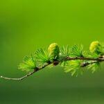 Cambiamento climatico: un aiuto dalle piante con poca clorofilla