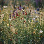 Le app per riconoscere piante e fiori: quali scaricare