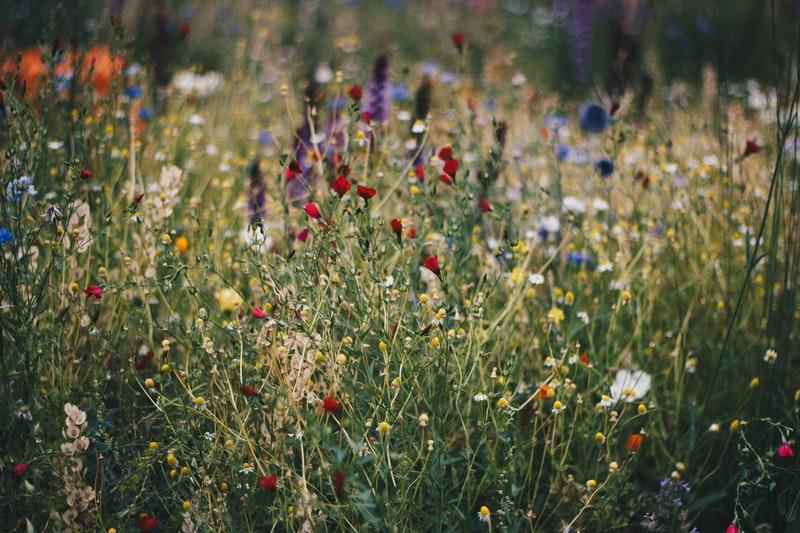 app per riconoscere piante
