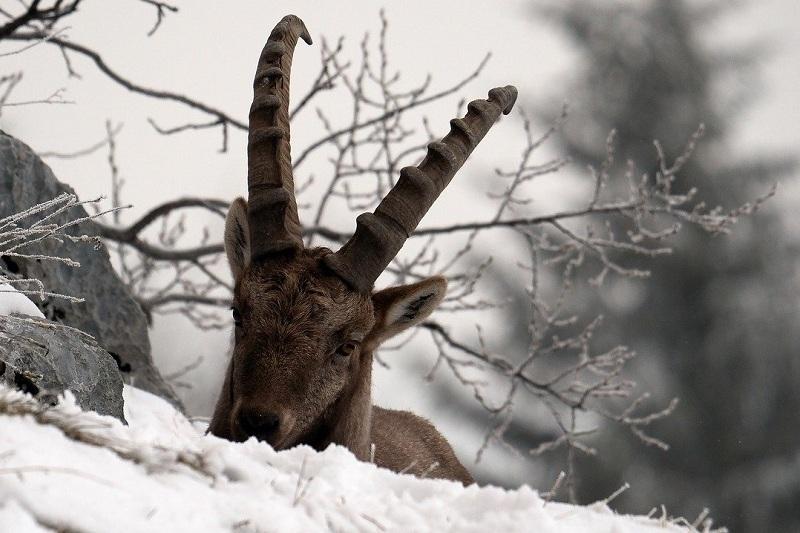 animali selvatici inverno