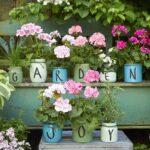 Come curare i gerani, 10 consigli per diventare esperti