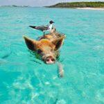 Giornata Mondiale degli Oceani: festeggiamola e capiamo da cosa sono minacciati